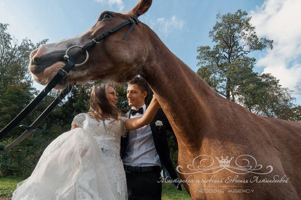 Лошади на свадьбе
