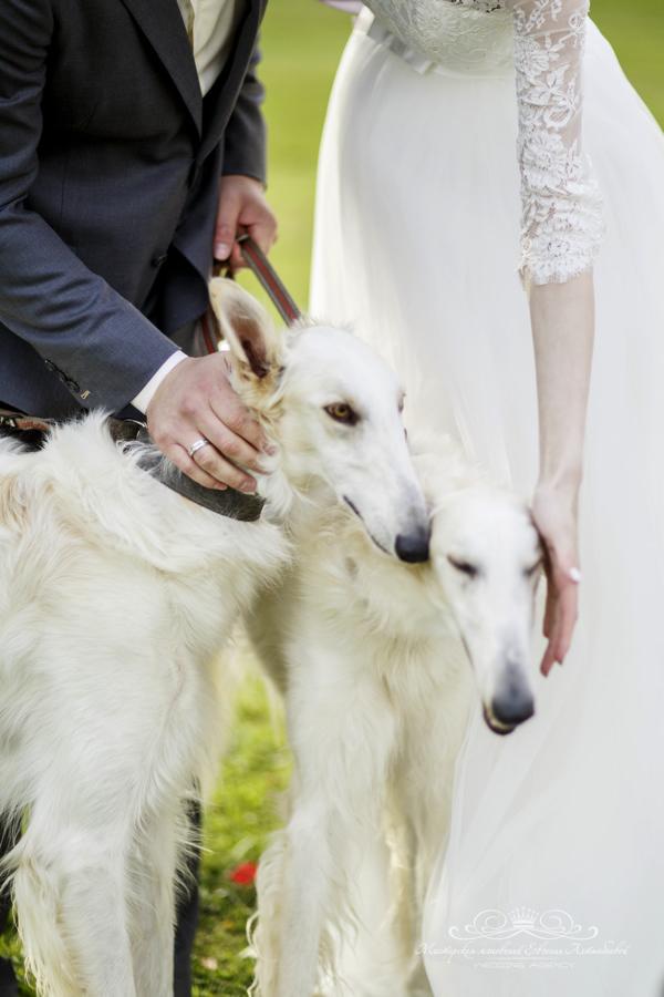Свадебная фотосессия с гончими